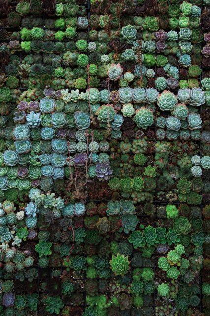 Neben- und übereinander geordnete grünblaubraune Sukkulenten