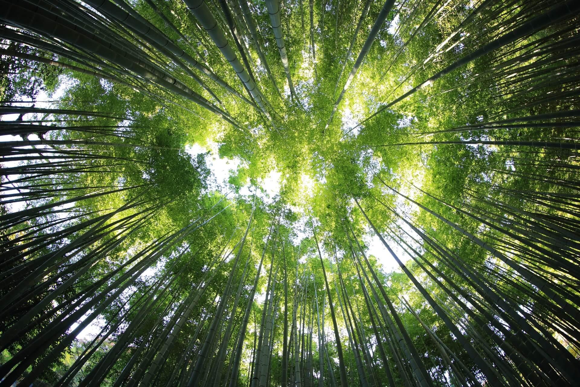Der Himmel wird sichtbar durch die Baumkronen